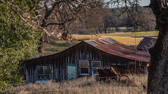 Abandoned house (Jerry Hamblen) Tags: abandoned house reddingcalifornia field trees melancholy tin roof