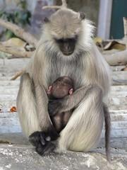 udaipur 2019 (gerben more) Tags: udaipur monkey young animal rajasthan india