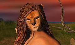 LION (Alea Lamont) Tags: ndmd male lion skin appliers vista gerard bento head signature gianni mesh body