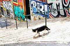 Obrigato (kirstiecat) Tags: lisbon lisboa portugal cat kitty caturday graffiti streetart steps stairs feline gato gata chat streetcat colors colours obrigato obrigado portugrafia catshadow city street canon urban