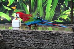 Green Winged Macaw [7] (Ian R. Simpson) Tags: greenwingedmacaw macaw parrot bird loroparque zoo tenerife canaryislands spain puertodelacruz box