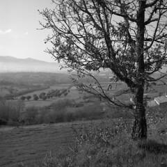 Heading for Peroviseu (lebre.jaime) Tags: portugal beira peroviseu landscape tree mist field mountain hasselblad 500cm planar cf2880 film120 mf middleformat squareformat 6x6 analogic blackwhite bw noiretblanc pb pretobranco ptbw kodak tmax100 tmx epson v600 affinity affinityphoto covadabeira