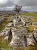Winskill Stones (Dave Snowdon (Wipeout Dave)) Tags: davidsnowdonphotography canoneos80d landscape winskillstones limestonepavement yorkshiredales yorkshiredalesnationalpark northyorkshire yorkshire tree hawthorn moss hills