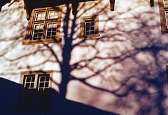 Shade Tree (Bephep2010) Tags: 2019 baum fenster kodakgold minolta minoltamd50mm114 minoltax700 photoexif schatten schattenbeum schweiz solothurn switzerland x700 analog analogue shade shadow tree window kantonsolothurn ch