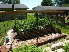 P1080946 (LPompey) Tags: garden strawbale strawbalegarden gardening