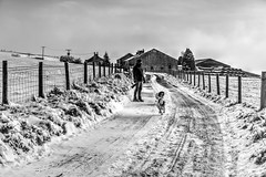 Top'o'th'Hill! (Missy Jussy) Tags: snow winter weather britishweather january 2019 road lane lancashire landscape fence man trevorkerr rupert razz englishspringer fixedfocallength primelens springerspaniel spaniel pets dogs dogwalk farmland fantastic50mm buildings topothhill newhey rochdale mono monochrome blackwhite bw blackandwhite trees sky outdoor outside 50mm ef50mmf18ll ef50mm canon50mm canon5dmarkll canon5d canoneos5dmarkii canon littledoglaughednoiret