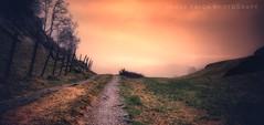 Countryside Sunset (Jorge Falck Photography) Tags: sunset sundown sunlight sun summer landscape landscapes landscapephotography jorgefalckphotography countrysidelandscape countryside ngc norway norwegianlandscapes clouds road landscapedreams dramaticlandscape beautiful trees forrest fairytalelandscape fairytale dreams inexplore