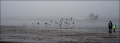 Nautical Knots (gatorgalpics) Tags: boat fog blowing lowtide saturdayatthebeach explore118