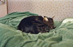 (Chris Hester) Tags: 65 138p baildon cat bert bed