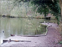 Little Dawley Pools walk with Lizzie 020319©Liz callan (3) (Liz Callan 6 million views) Tags: littledawley littledawleypools water lizzie trees paths lizcallan lizcallanphotograph lizcallanphotography telford shropshire