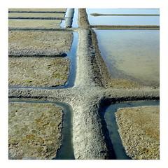 Marais salants - Guérande (Esteban 86360) Tags: marais salants guérande guérandaise guérandais croisic batz labaule baule pouliguen 44 bretagne france minimaliste géométrique carré eau water sel iode salt