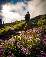 Hiking (kephart_kyle) Tags: august cliffs climb d800 flowers landscape mountains mt nationalpark nikon rainier snow summer sunset teague washington wild wildflowers