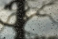 *** (pszcz9) Tags: deszcz raindrop bokeh drzewo tree kropla drop beautifulearth sony a77