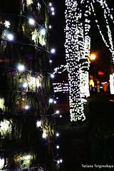 Гирлянды на стволах деревьев (tatianatorgonskaya) Tags: сербия новисад новыйгод новыйгодвсербии новыйгодвновомсаде балканы путешествие европа блог блогопутешествиях блогожизнизарубежом ярмарка новогодняяярмарка праздничнаяярмарка рождественскаяярмарка зимавсербии зимавновисаде праздники праздникивсербии srbija serbia balkans balkanstravel balkan europe novisad christmas воеводина vojvodina