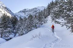 Vall d'Incles, Principat d'Andorra (kike.matas) Tags: canon canoneos6d canonef1635f28liiusm kikematas valldincles canillo andorra andorre principatdandorra pirineos paisaje invierno nieve raquetas senderismo hiking bosque nature montañas arboles lightroom6 андорра snow