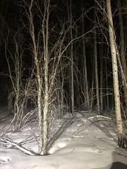 Chinchaga county side forest (jasonwoodhead23) Tags: chinchaga forest alberta night