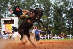 Edmar Nera e Macumbeiro da Combate (Eduardo Amorim) Tags: gaúcho gaúchos gaucho gauchos cavalos caballos horses chevaux cavalli pferde caballo horse cheval cavallo pferd pampa campanha fronteira quaraí riograndedosul brésil brasil sudamérica südamerika suramérica américadosul southamerica amériquedusud americameridionale américadelsur americadelsud cavalo 馬 حصان 马 лошадь ঘোড়া 말 סוס ม้า häst hest hevonen άλογο brazil eduardoamorim gineteada jineteada