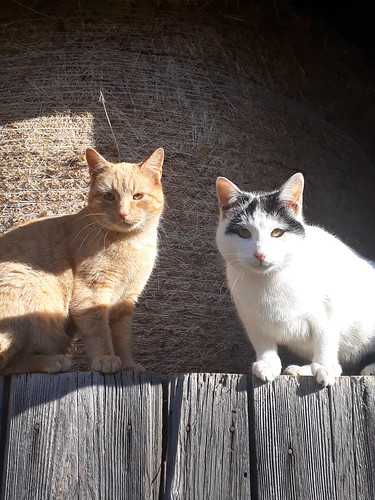 Winni und Petzi