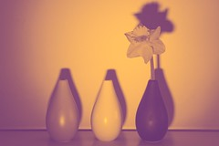 Threesame (tanyalinskey) Tags: three goldentones flower daffodil vases threesame smileonsaturday vase