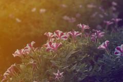 002 (niecky.sapasap) Tags: flowers plants green dreamy garden botanical