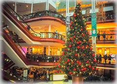 So it's Christmas (Nicolas Valentin) Tags: glasgow princesssquare europe scotland shop tree christmas
