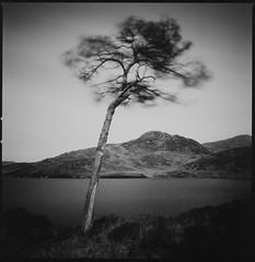 Scots Pine by Loch a Bhada Dharaich (Mark Rowell) Tags: scotspine morar highlands scotland hasselblad 903 swc fuji acros bigstopper 6x6 120 blackandwhite bw film lochabhadadharaich