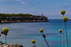 Pianosa 19701 (Roberto Miliani / Pelagos.it) Tags: pianosa isola hiking trekking walking elbe island ile camminare parconazionale arcipelagotoscano toscana tuscany toskana