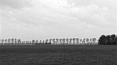 Impression Of A Grey Day (Alfred Grupstra) Tags: blackandwhite nature monochrome tree field outdoors grass landscape meadow sky nopeople europe holland grain adox chs100ii