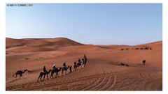 Where are we going? (Mirko Daniele Comparetti) Tags: ma marocco morocco sahara animali animals azzurro blue camel cammello cielo desert deserto marrakechexpress2019 people persone sabbia sand sky