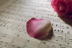 One single petal (Liliane Loose) Tags: smileonsaturday petal onesinglepetal