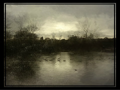 Lake and Ducks (Bill Eiffert) Tags: painterly trees nature ducks painting edit textures frame emotion atmospheric