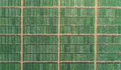 Ariel box view, Ludhiana (Borlaug Institute for South Asia) Tags: asia basket bisa borlaug institute for south cimmyt collaboration crop farm farmer farming field partnership person plant plot producer ludhiana drone wheat direct seeding agriculture india pusa site man indian asian maize corn