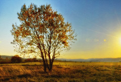 Sunny afternoon. (Bessula) Tags: bessula nature autumn fall tree field skay sun landscape grass bushes forests view cow texture coth5