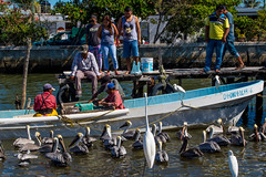 Shrimp catcher with Helpers (Globalbirder) Tags: mexico campeche carbbeansea travelphotography pictravelvacationfernwehgulfofmexiconatureyucatan