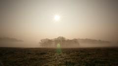 Shrouded (ianderry64) Tags: weather nature landscape leicestershire park bradgate silhouette light sun sunshine backlit copse spinney woods foggy fog misty mist shrouded