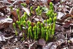 19o2812 (kimagurenote) Tags: sprout 東高根森林公園 higashitakane forest park 川崎市宮前区 miyamaekawasaki