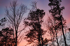 Pink And Blue Sky. (dccradio) Tags: lumberton nc northcarolina robesoncounty outdoor outdoors outside nature natural march spring springtime sunday sundayevening sundaynight evening silhouette tree trees treebranch branch branches treebranches treelimb treelimbs sky colorful colorfulsky sunset sunsetsky clouds pinkclouds bluesky nikon d40 dslr scenic woods wooded forest beauty beautiful pretty landscape