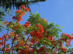 Polynésie 2019 - Tahiti (Valerie Hukalo) Tags: tahiti archipeldelasociété hukalo valériehukalo océanpacifique pacificocean océanie oceania polynésiefrançaise polynesia frenchpolynesia flore flower fleur punaauia