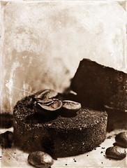 2019 Sydney: Sepia Coffee (dominotic) Tags: 2019 coffeeobsession food drink wedgwoodcountrywareespressocup coffeegrinds coffeebeans coffee coffeepuck foodphotography sepia yᑌᗰᗰy sydney australia