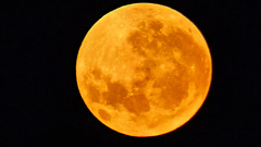 Orange moon tonight (Sandy Austin) Tags: panasoniclumixdmcfz70 sandyaustin massey westauckland auckland northisland newzealand moon orange full