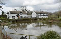 Brook Lodge 170319_DSC3304 (Leslie Platt) Tags: exposureadjusted straightened cheshirewestchester huxley hoofield hoofieldlane brooklodge blackswan