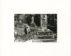 (?) Tags: darkroom print ilford warmtone fiber japan trix nara