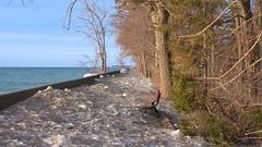 033 -1crpvib (citatus) Tags: snow ice sand boardwalk wards centre island waves sea wall toronto islands canada spring morning 2019 pentax k3 ii