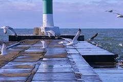 022685 Air Force Fly-By (David G. Hoffman) Tags: seagulls pier lake lakemichigan