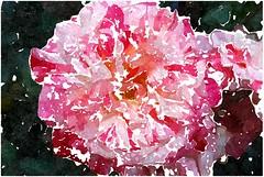 Ganz getrost und ohne Zagen (amras_de) Tags: rose rosen ruža rosa ruže rozo roos arrosa ruusut rós rózsa rože rozes rozen roser róza trandafir vrtnica rossläktet gül blüte blume flor cvijet kvet blomst flower floro õis lore kukka fleur bláth virág blóm fiore flos žiedas zieds bloem blome kwiat floare ciuri flouer cvet blomma çiçek zeichnung dibuix kresba tegning drawing desegnajo dibujo piirustus dessin crtež rajz teikning disegno adumbratio zimejums tekening tegnekunst rysunek desenho desen risba teckning çizim