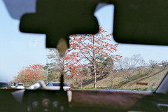 (Ektachromex) Tags: film filmlife kodak colorplus200 colorplus eosa2 eos5 50mm 5018 50mmf18 taiwan taipei