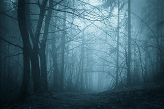 pic Misty Forest (DRlFTERcgb) Tags: autumn background beam black blue cold color dark darkforest dusk enchanted evening fairytale fall fantasy fantasyforest fog foggy forest ground landscape light magic midnight mist misty mood morning mystery nature night path rain rainy road scary shadow silhouette soft transylvania tree weather wind woods