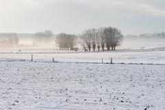 Foggy morning in Huldenberg (Patrick Carpreau) Tags: belgie belgium flanders leemplateauvanhuldenbergbertem vlaanderen photoshopcc2019