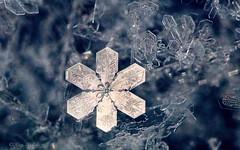 Snow Flower (Katy on the Tundra) Tags: snowflake snow macro
