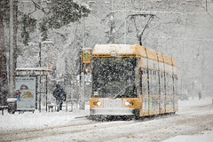 NGT 6 DD #2536 (rengawfalo) Tags: ngt dresden sachsen saxony dvbag dresdnerverkehrsbetriebe tram tramway strasenbahn train railroad bahn tranvia tramvaj elektricka öpnv publictransport urbanrail tramwaj sporvogn car road schnee winter snow